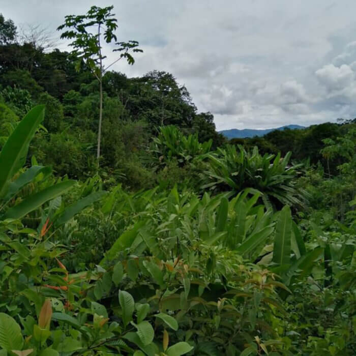 Finca en Puntarenas, Precio: ¢39,942,737.00